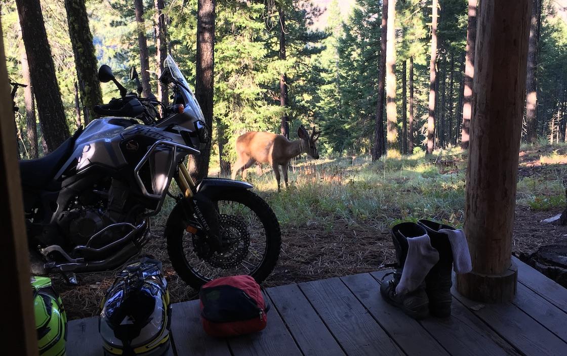 deer-morning